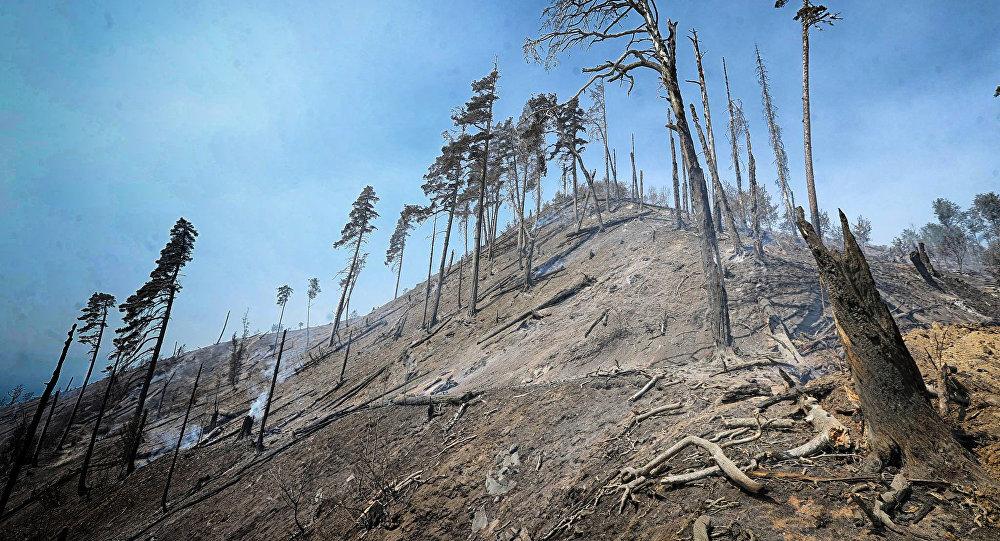 Пожар, возникший в Боржомском лесу 20 августа, удалось ликвидировать