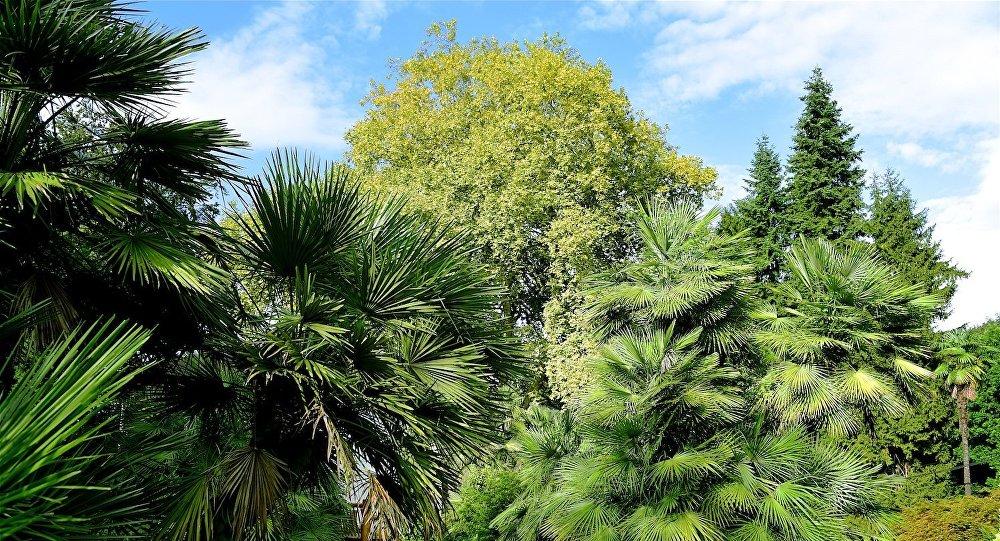 Батумский ботанический сад распахнул двери для посетителей